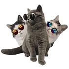 애완동물선글라스