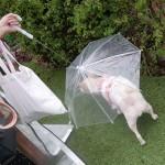 4YOU 반려동물우산 / 강아지우산 / 산책우산